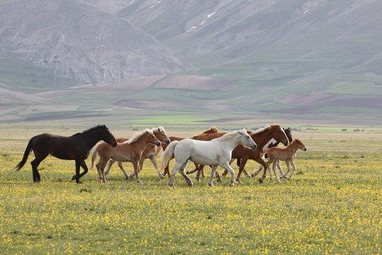 Wild Horses, Umbria