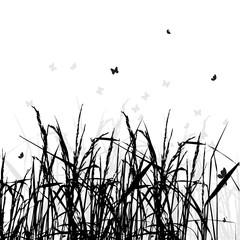 Grass silhouette, summer background