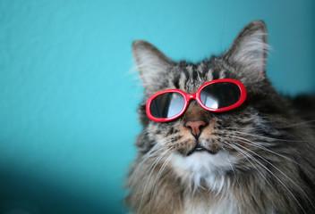 Cool Cat #3