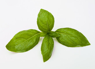 Close up of basil leaves on white background