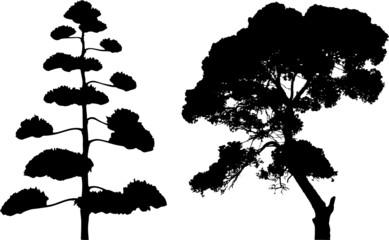 Two tree silhouettes on white.