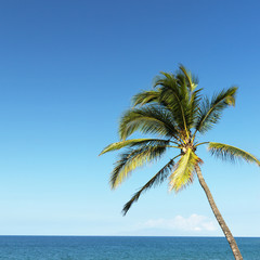 Palm tree and ocean.