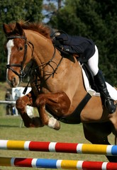 Show Jumping Horse and Rider