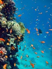 Korallenriff rotes Meer
