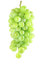 white grapes isolated over white