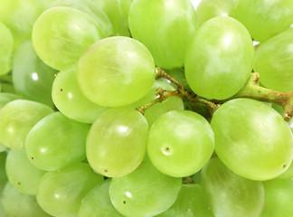 closeup white grapes