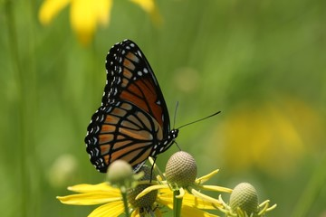 Butterfly and Blooms 2