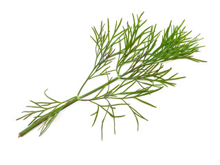 The photo of the green dill at the white background