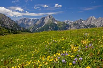 Bergwiese im Karwendel