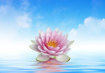 Foto auf Gartenposter Lotosblume fleur de lotus et reflets