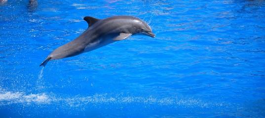 Papiers peints Dauphin dauphin qui saute 3