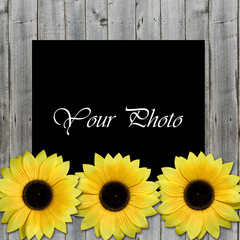 beautiful framework for photo with sunflowers