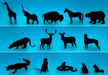 Posing animals