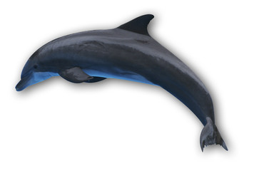 Fotorollo Delphin Delfin