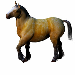 3D beautiful horse