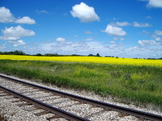 Prairie Field With Tracks
