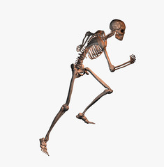Anatomie 080720 1