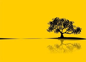 árvore ao sol