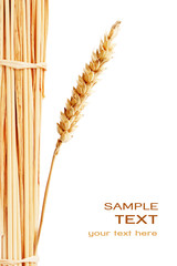 Wheat isolated on white with text