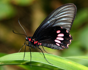 BUTTERFLY STANDING