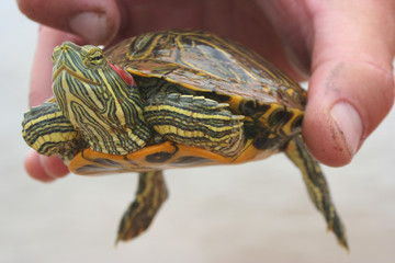 Close-up Turtle