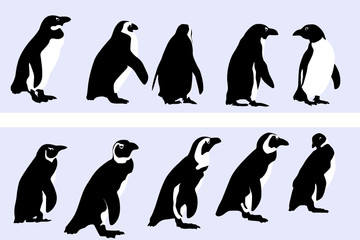penguin motif , vector collection for designers
