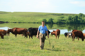 cowboy with cows