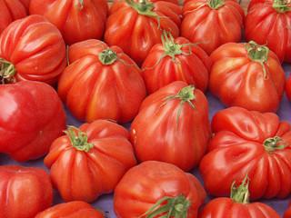 """tomates """"coeur de boeuf"""""""