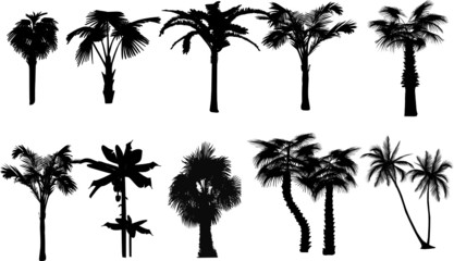 Collection of palms. Vector