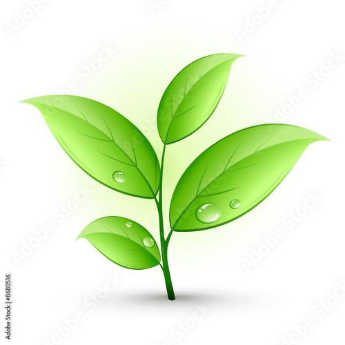 Jeune Plante Verte Fichier Vectoriel Libre De Droits Sur