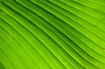 feuille végétale