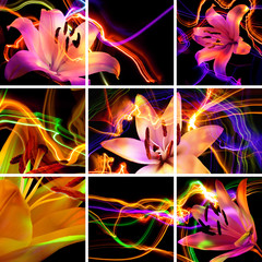 Flower a lily: aroma of night