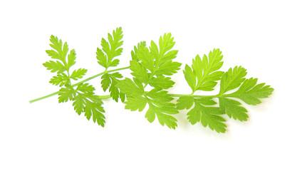 Wild parsley