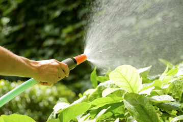 watering the plants with a garden hose