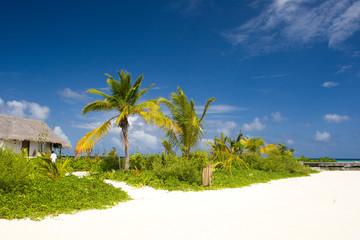 Maldivian Beach Side