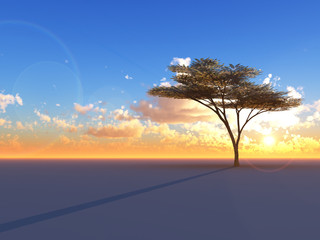 A lone Umbrella Acacia tree on a flat sunset horizon
