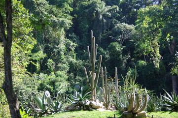Jardin tropical, Rio de Janeiro, Brésil.