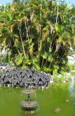 Bassin avec fontaine et tortues. Rio de Janeiro, Brésil.