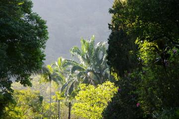 Arbres dans un jardin tropical, Rio de Janeiro, Brésil.