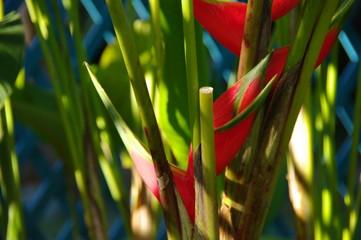 Fleurs tropicales rouges.