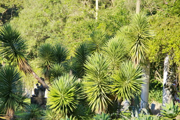 Plantes exotiques dans un jardin tropical, Rio, Brésil