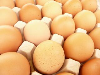 Eggs - Oeufs