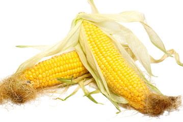 Yellow young corn isolated on white.