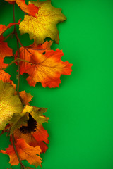 Fall leaves with pinecone on green background, fall border