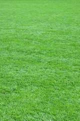 Pure empty green grass field cut vertical