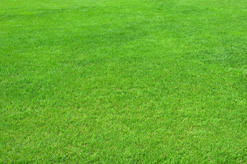 Pure empty green grass field cut horizontal