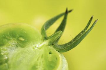 halved green unripened tomato on green