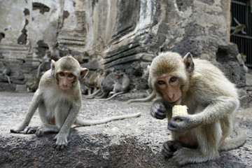 monkey friends in a park at Asia