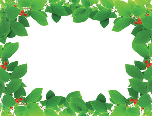 Green frame with red berries over white background.