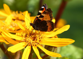 Colorful butterfly on yellow flower